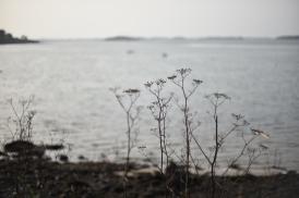 L'île aux Moines en 50mm #4