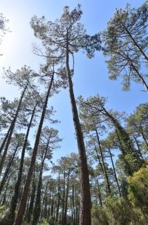 Forêt du Pignada #1