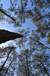 Forêt du Pignada #2